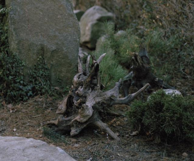 Jan Bigas, Z cyklu Kdesi mezi lesy, 2012