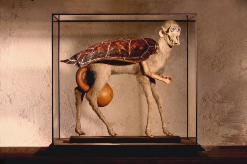 Falešná želva, 2002, objekt