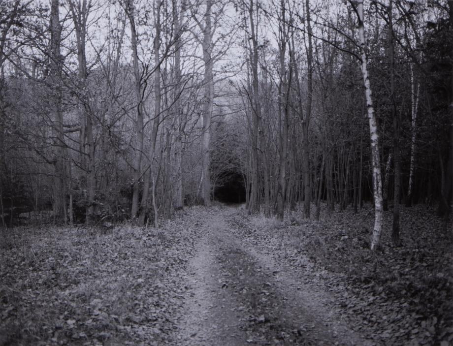 Alena Kotzmannová, Pokus o znovunalezení skutečnosti VII., 2016, fotografie
