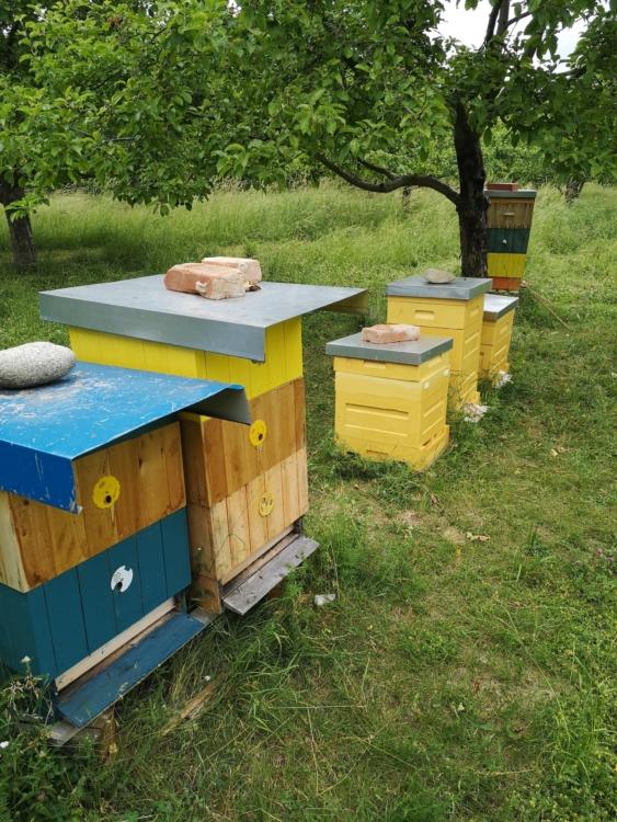 nová včelstva – výsledek včelařského kurzu
