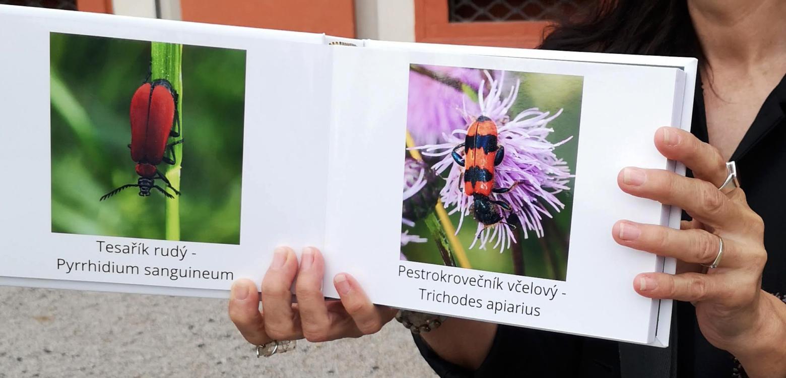 """Marie Steinerová a prohlídka zahrady """"Ze života hmyzu"""""""