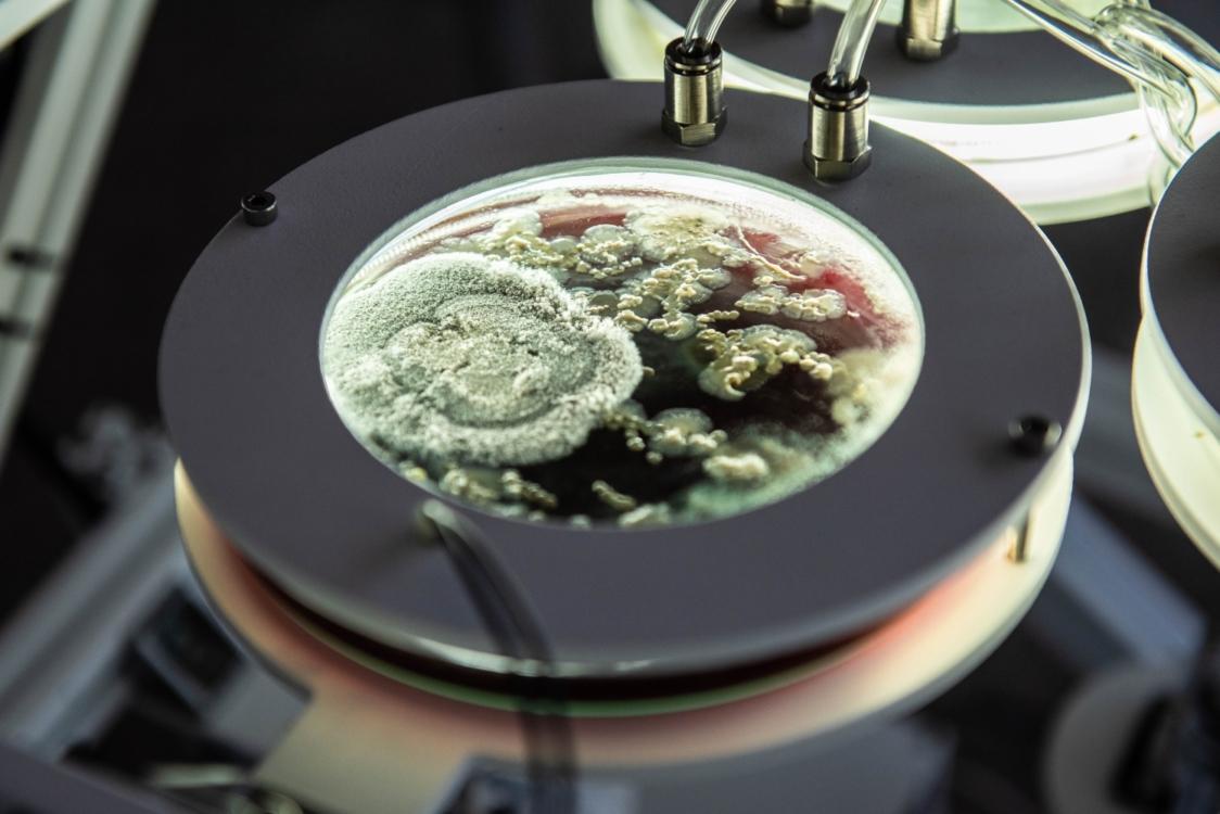 Saša Spačal, MycoMythologies Rupture. Photo by Kalsey Heyden