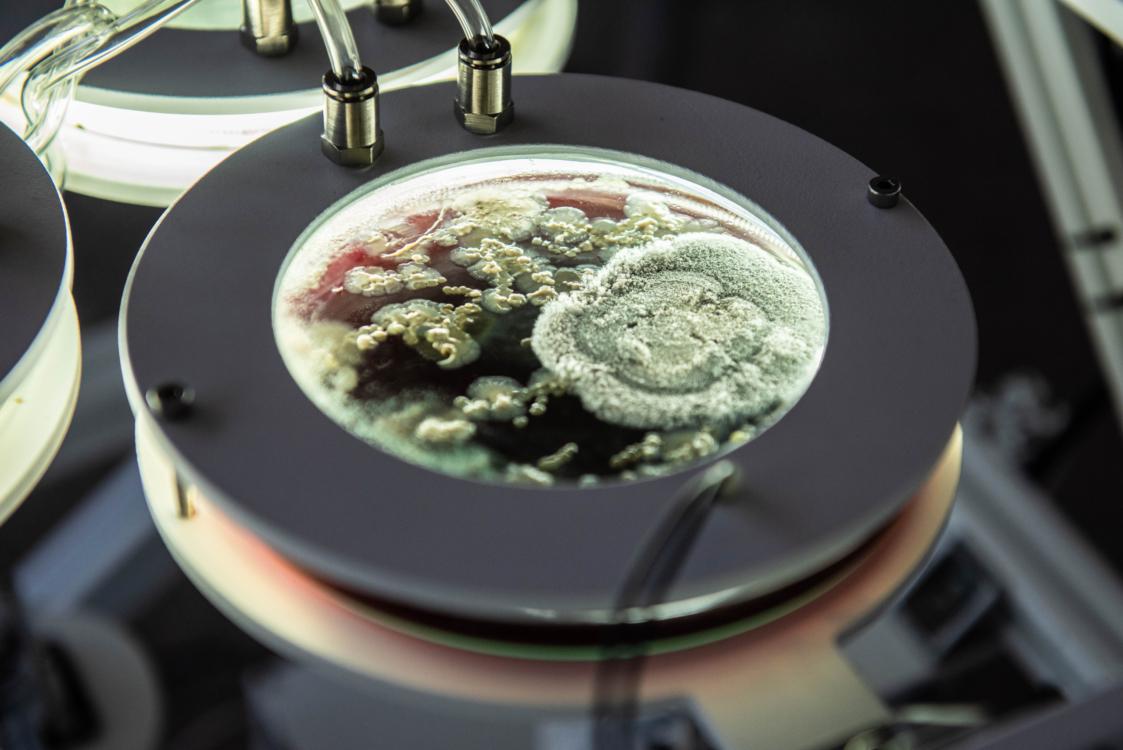 MycoMythologies Patterning Saša Spačal. Photo Marthe Vos