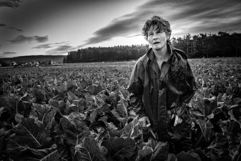 Karel Cudlín / 400 ASA, Zemědělští dělníci, Čechy 2019
