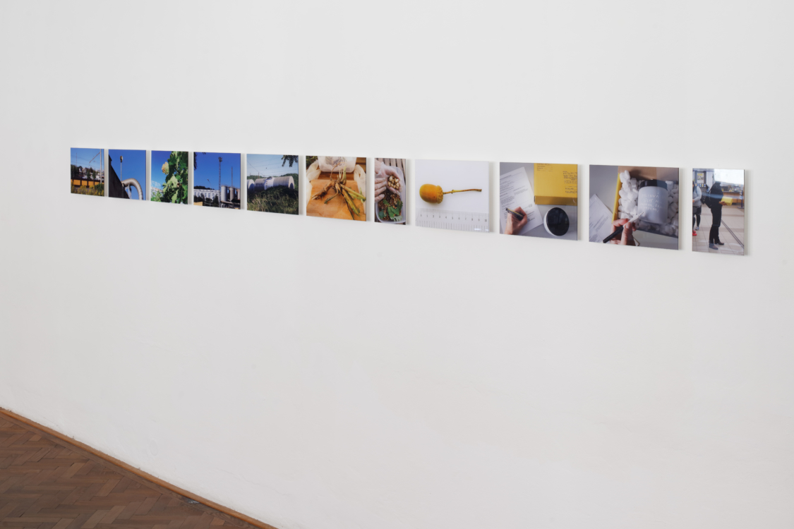 pohled do výstavy Zdena Kolečková: Podivná botanika, Colloredo-Mansfeldský palác 2018, foto Tomáš Souček